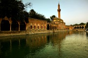 17-Turkey-Salinurfa-Pool-of-Sacred-Fish