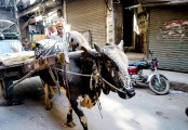 LAHORE OLD CITY - THE MARKETS (51)