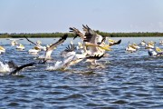 Romania-Dobrogea-and-Danube-Delta-012