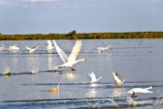 Romania-Dobrogea-and-Danube-Delta-014