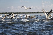 Romania-Dobrogea-and-Danube-Delta-095