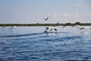 Romania-Dobrogea-and-Danube-Delta-098