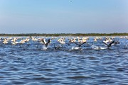 Romania-Dobrogea-and-Danube-Delta-Isac-Lake-092