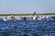 Romania-Dobrogea-and-Danube-Delta-Isac-Lake-093