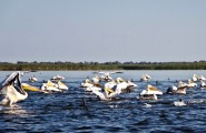 Romania-Dobrogea-and-Danube-Delta-Isac-Lake-094