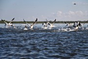 Romania-Dobrogea-and-Danube-Delta-Isac-Lake-096