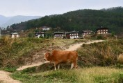 Bhutan-Punakha-and-Wangdue-Valley-026