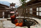 Bhutan-Punakha-and-Wangdue-Valley-056